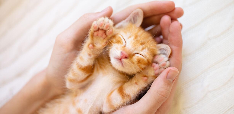 Психологи рассказали, как общаться с кошками при помощи глаз